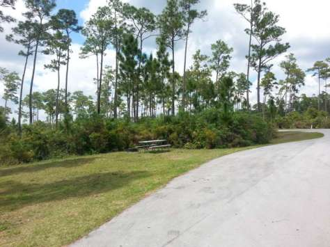 Long Pine Key Campground in Everglades National Park2