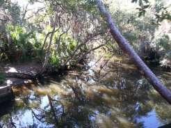 Oscar Scherer State Park in Osprey Florida4