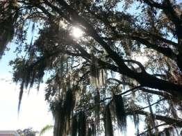 Sun N Fun RV Resort in Sarasota Florida3