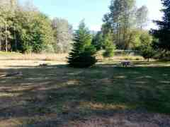 alpine-rv-park-marblemount-washington-04