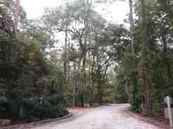 Blythe Island Regional Park in Brunswick Georgia Roadway