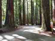 burlington-campground-humboldt-redwoods-state-park-03