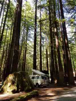 burlington-campground-humboldt-redwoods-state-park-05