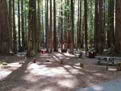 burlington-campground-humboldt-redwoods-state-park-07
