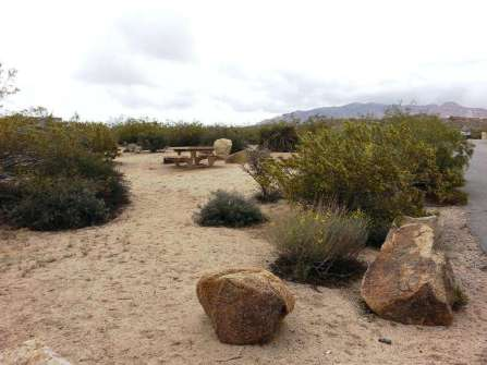 cottonwood-campground-joshua-tree-national-park-07