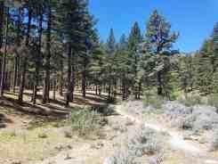 davis-creek-county-park-campground-08