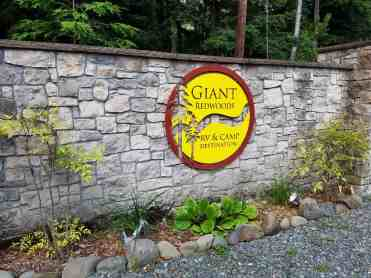 giant-redwoods-cam-destination-myers-flat-ca-05