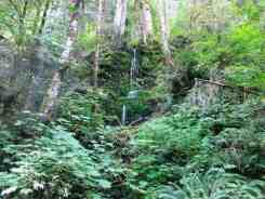 graves-creek-campground-olympic-national-park-05