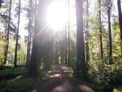 graves-creek-campground-olympic-national-park-16