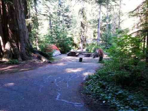 heart-o-the-hills-campground-olympic-national-park-04