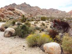 indian-cove-campground-joshua-tree-national-park-4