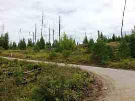 kintla-lake-campground-glacier-national-park-16