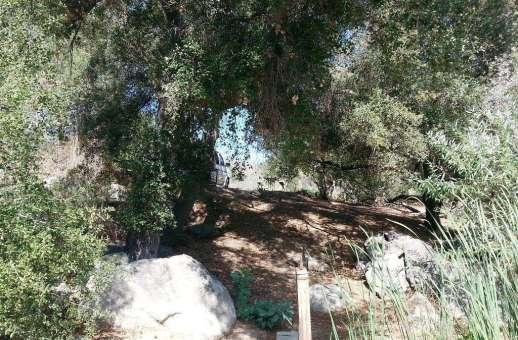 lilac-oaks-campground-california-06