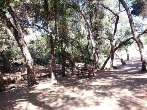 lilac-oaks-campground-california-14