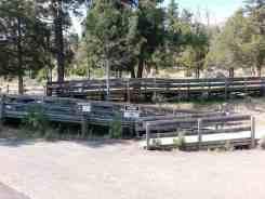 mammoth-campground-yellowstone-national-park-24