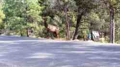 mather-campground-grand-canyon-0117