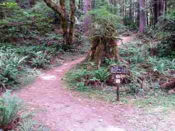 mill-creek-campground-redwoods-08