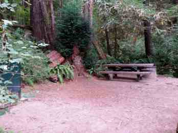 mill-creek-campground-redwoods-09