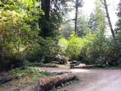 mill-creek-campground-redwoods-11