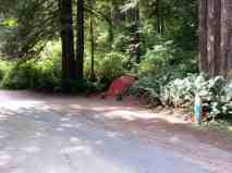 mill-creek-campground-redwoods-13
