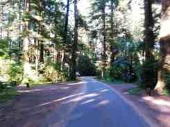 mora-campground-olympic-national-park-04
