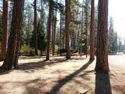 nevada-county-fairgrounds-rvpark-grass-valley-11