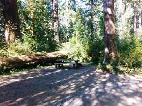 north-fork-campground-olympic-national-park-06