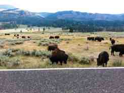 pebble-creek-campground-yellowstone-national-park-20