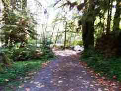 queets-campground-olympic-national-park-07