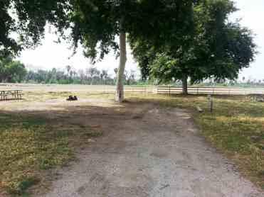 rancho-jurupa-county-park-campground-11