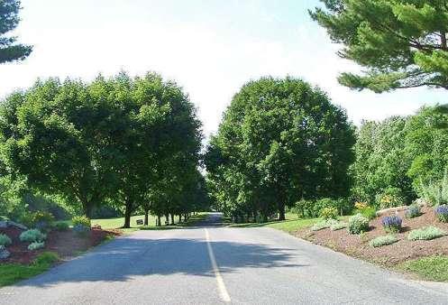 roadstrees