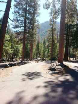 sentinel-campground-sequoia-kings-canyon-national-park-15