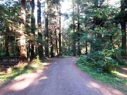 three-rivers-campground-forks-wa-04
