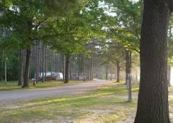 treed sites