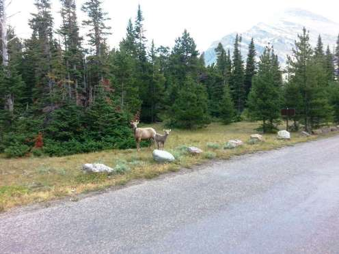 two-medicine-campground-glacier-national-park-10