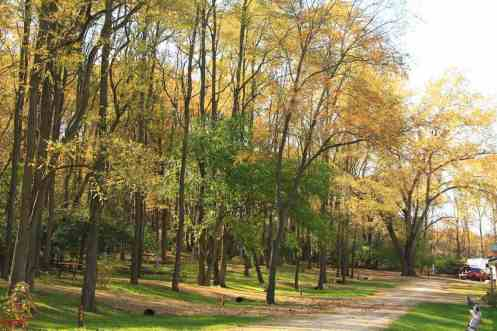 wooded sites