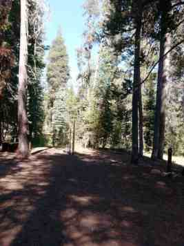 yosemite-creek-campground-yosemite-national-park-ca-05