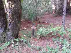 forest-nisene-marks-campground4