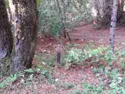 forest-nisene-marks-campground4