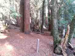 forest-nisene-marks-campground5