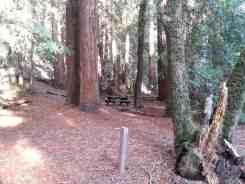 forest-nisene-marks-campground5