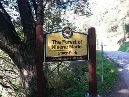 forest-nisene-marks-campground8