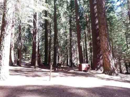 atwell-mill-campground-sequoia-national-park-06