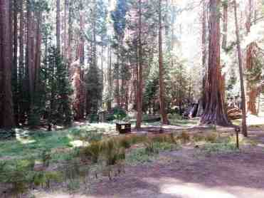 atwell-mill-campground-sequoia-national-park-07