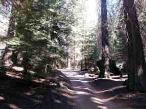 atwell-mill-campground-sequoia-national-park-09