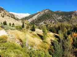 cold-springs-campground-sequoia-kings-canyon-national-park-21