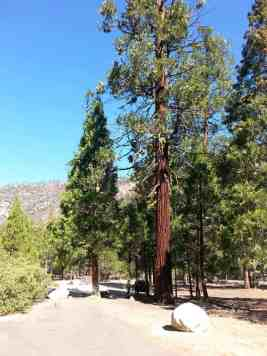 moraine-campground-sequoia-kings-canyon-national-park-03