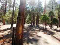 moraine-campground-sequoia-kings-canyon-national-park-06