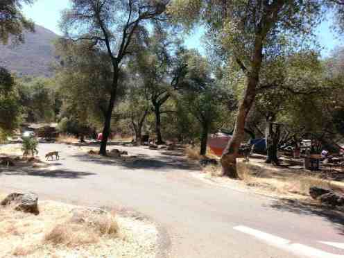 potwisha-campground-sequoia-kings-canyon-national-park-16