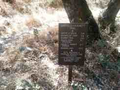 south-fork-campground-seqouia-national-park-11